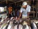 """Ambazonia Lock down made Limbe """"inhabitable"""" to Limbe FESTAC Visitors; who couldn't find Roasted Sea Fish to eat (PHOTOS)"""